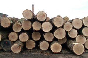 oak-logs-1511548